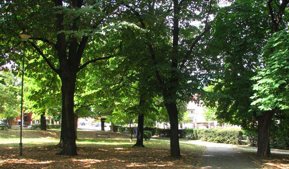 Gradski park u Vranju. Foto VranjeNews