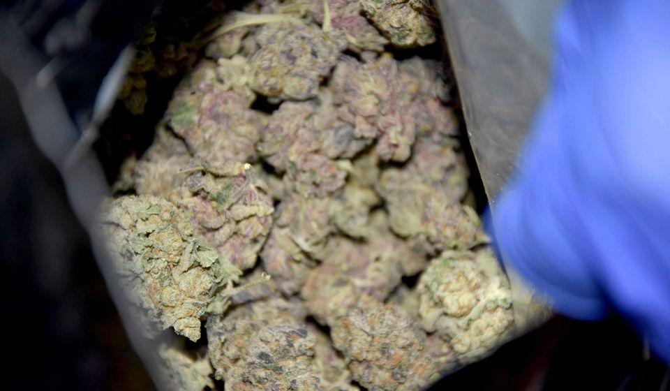 Kod osumnjičenih pronađeno 80 kilograma marihuane. Foto ilustracija UC