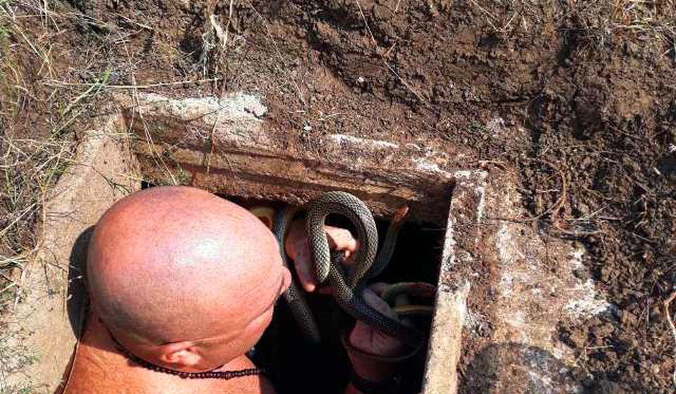 Neustrašivi Vladica Stanković vadi zmije iz rezervoara. Foto privatna arhiva